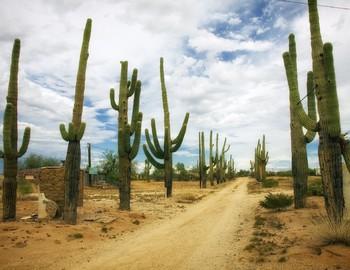 FREE - Cactus Classroom Decor (K-12)