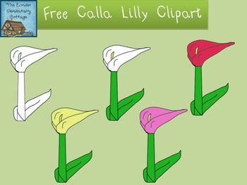 *FREE* Calla Lilly Flowers Clipart