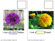 FREE Colorful Flowers Interactive Book