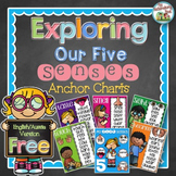 FREE Exploring Our Five Senses Anchor Charts - English/Aussie Version