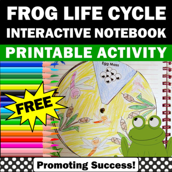 FREE Frog Life Cycle Craft