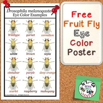 FREE Fruit Fly Drosophila melanogaster Eye Color Legal Siz