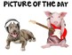 FREE Funny Animals Picture Prompts for Narrative Writing PowerPoint