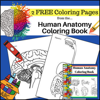 Creations By LAckert Teaching Resources