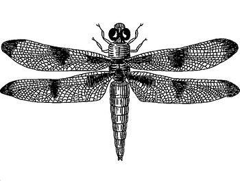 FREE - Insects Art Activities