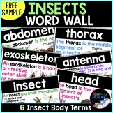 FREE Insects Word Wall Cards - Insects Body Part Terms for