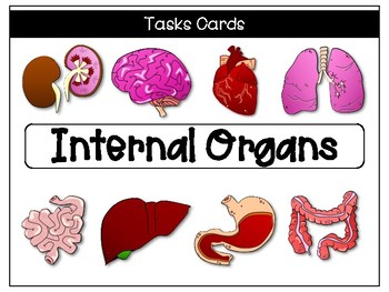 FREE! Internal Organ Tasks Cards with QR Codes