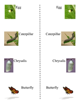 FREE! Monarch Life Cycle Picture Word Bank for Primary