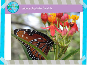 FREE Butterfly Photograph!