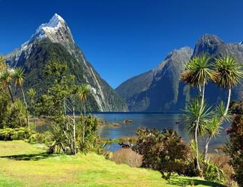 FREE - New Zealand Curriculum