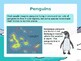 FREE Penguins PowerPoint and Quiz