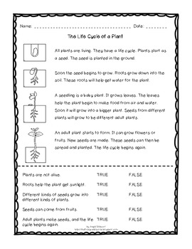 FREE Plant Life Cycle Reading Passage with Comprehension Q