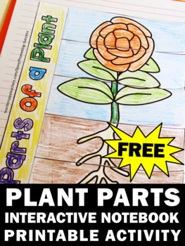 FREE Parts of a Plant Folda... by Promoting Success ...