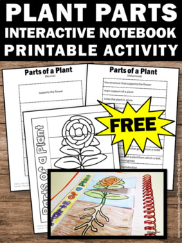 FREE Parts of a Plant Foldable, Plants Interactive Notebook, Plant Unit