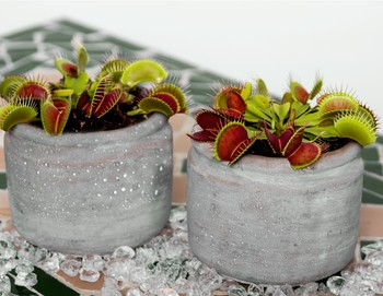 FREE - Plants