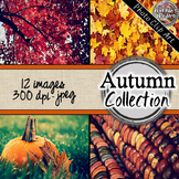 Autumn/ Fall Digital Paper