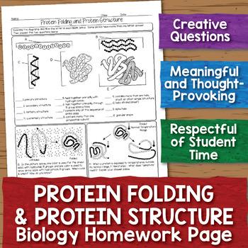 FREE Protein Structure Biochemistry Homework Page