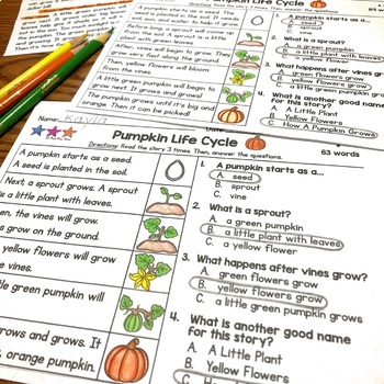 FREE Pumpkin Life Cycle Differentiated Reading Comprehension Passage