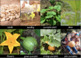 FREE Pumpkin Life Cycle Picture Cards - How to Grow Pumpkins - Poster Activities