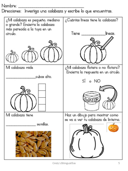 FREE Pumpkin Life Cycle Samples in Spanish