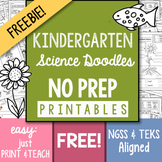 FREEBIE! NO-PREP Kindergarten Science Doodle Printables