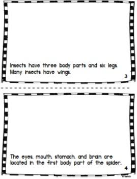 Spider Facts Mini Book