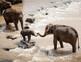 FREE - Zoo Animals