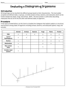 Constructing a Cladogram of Organisms Activity Worksheet  TpT