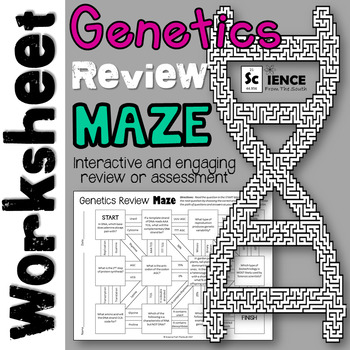 Genetics Review Maze Worksheet for Review or Assessment
