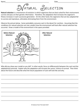 natural selection worksheet for review or assessment by science from the south. Black Bedroom Furniture Sets. Home Design Ideas