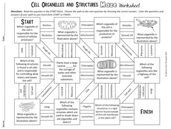 Cell Organelles And Structures Maze Worksheet For Review Or Assessment