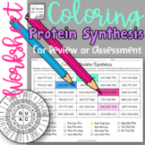 Coloring Protein Synthesis Worksheet for Review or Assessment
