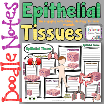 Epithelial Tissues Doodle Notes