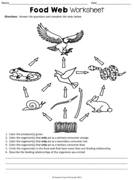 Food Web Worksheet for Review or Assessment