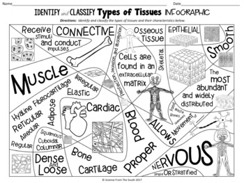 Identify and Classify Types of Tissues in the Human Body Infographic