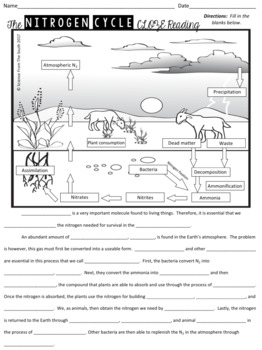 The Nitrogen Cycle CLOZE Reading with Diagram for Notes, Review, or Assessment