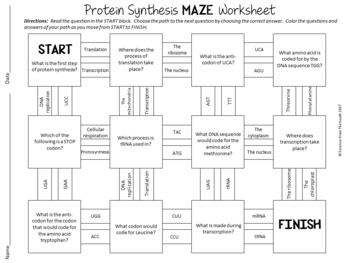 Protein Synthesis Maze Worksheet for Review or Assessment