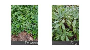 FREE herb flash cards