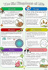 FREEBIE Six Kingdoms of Life Poster Project Instructions with Grading Rubric