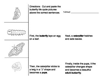 FREEBIE Butterfly Life Cycle Cut and Paste