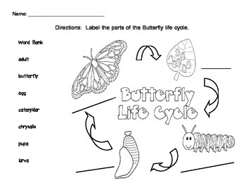 FREEBIE Butterfly Life Cycle  (Science Writing Activity)