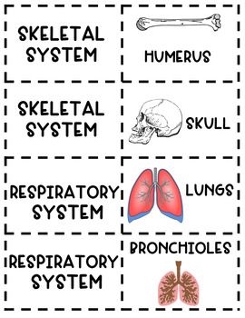 Human Body Systems - Mix and Match