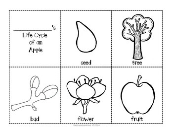 FREEBIE Life Cycle of An Apple