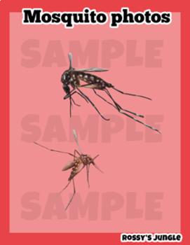FREEBIE Mosquito Photo