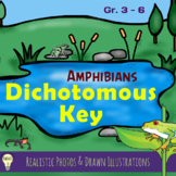 Science: The Dichotomous Key of Amphibians Worksheet