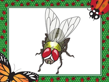 PDF Science Classifying  Arthropods Dichotomous Key Printables