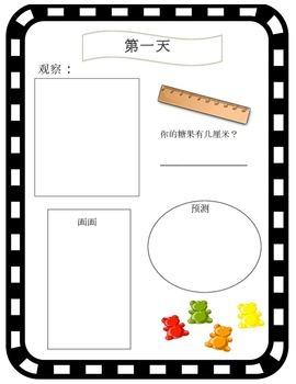 FREEBIE. Scientific Process - Gummy Bears in Water  CHINESE