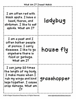 Insects Activity | Insects Printable | FUN Bugs and Insects Activity | FREEBIE
