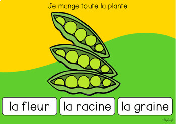 FRENCH BOOM CARDS • Plants