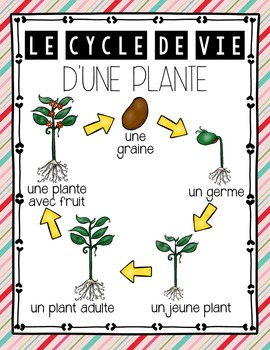 FRENCH PLANTS UNIT - GRADE 3 SCIENCE (LES PLANTES: CROISSANCE ET CHANGEMENT)